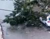 فيديو - انهيار شجرة في حي بات جاليم في حيفا