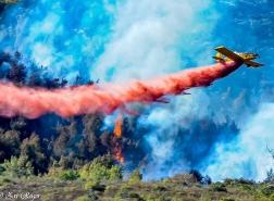 عشر سنوات على حريق غابات جبل الكرمل 2010