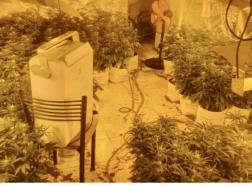 حيفا : اعتقال مشتبه (29 عامًا) بزراعة وانتاج المخدرات!