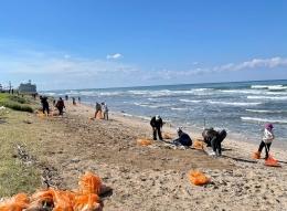 آلاف المتطوعين ينظفون الزفتة التي غطت الشواطئ: